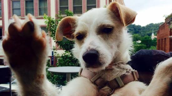 adopt me 2